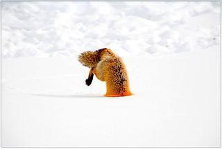 Foxhole2